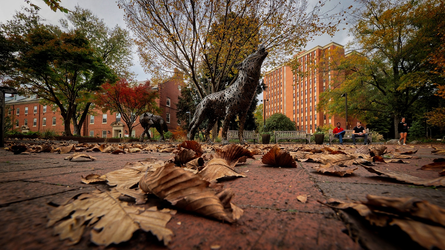 Cooper Wolves at Wolf Plaza surrounded by fall leaves